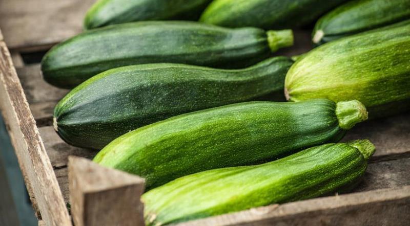Как долго хранится урожай цуккини, как продлить хранение овоща в свежем виде