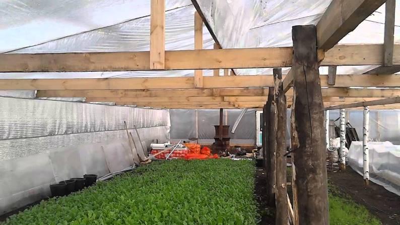 Как получить урожай редиски зимой в теплице