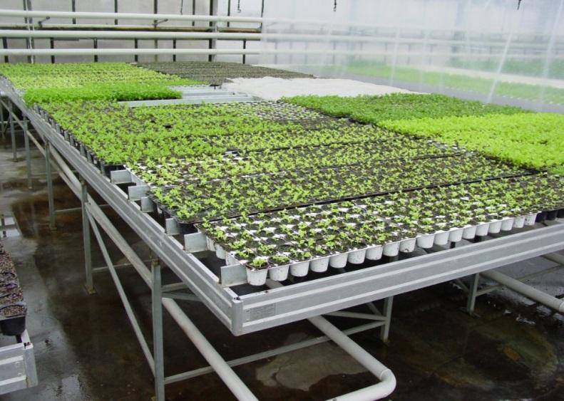 Как правильно организовать теплицу для выращивания редиса