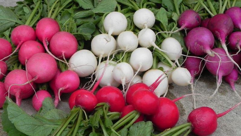 Какие сорта редиса подходят лучше всего для выращивания в яичных лотках