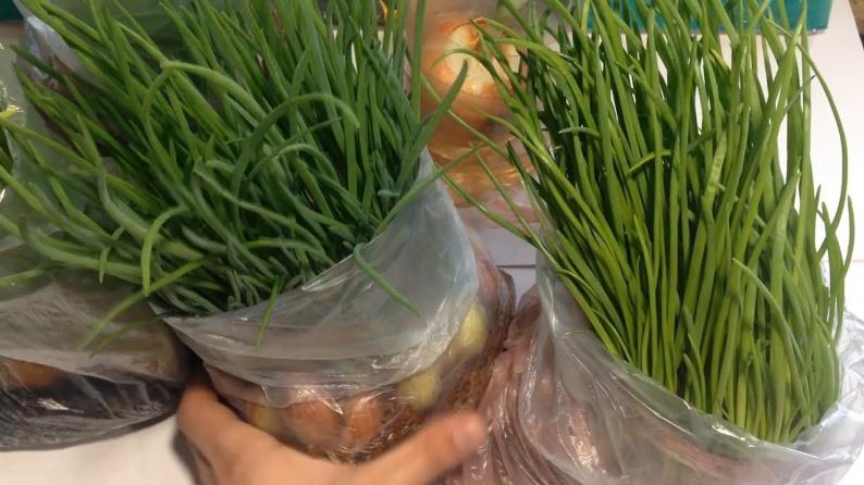 Лук на зеленое перо в пакете - простой и быстрый способ