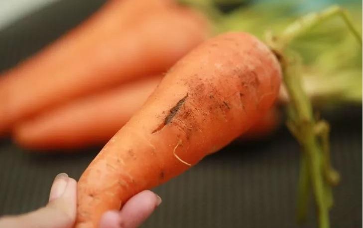 Можно ли сохранить урожай моркови с трещинами