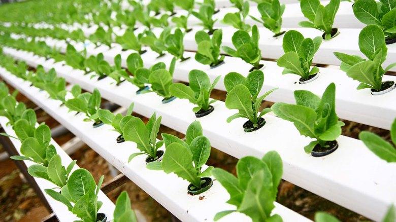 Организация зеленой грядки на балконе - выращиваем редис