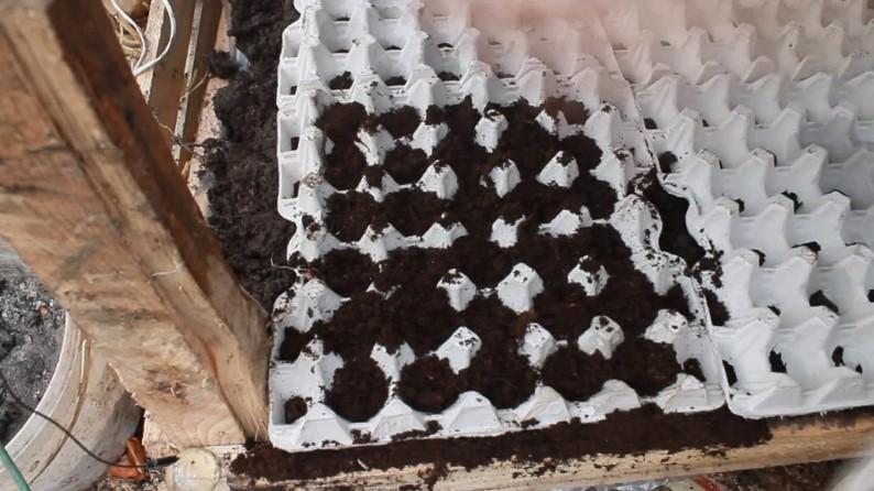 Поэтапная схема выращивания редиса в лотках из под яиц
