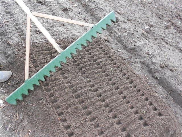 Посадка редиса в открытый грунт с помощью граблей, сроки проведения работ