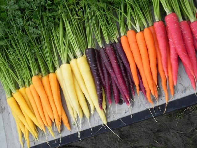 Разнообразие цветовой гаммы моркови