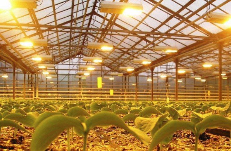 Редис в теплице из поликарбоната - сроки посадки и сбора урожая