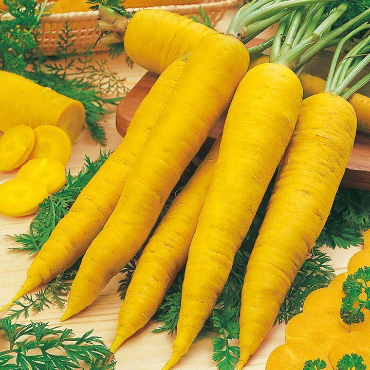 Желтая морковь Йеллоустоун американской селекции - признаки сорта