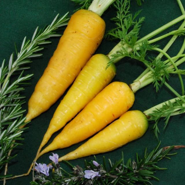 Желтая морковь Solar Yellow - состав и калорийность необычного сорта