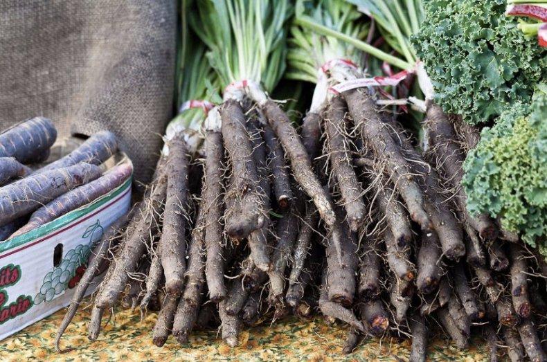 Черная морковь Скорцонера - сбор и хранение урожая