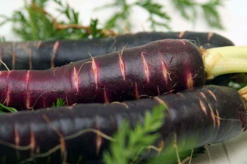 Черная морковь Скорцонера - удивительный овощ