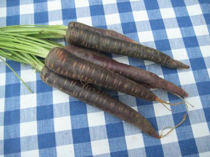 Черная морковь - польза для организма человека