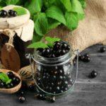 Черная смородина - польза и вред для здоровья