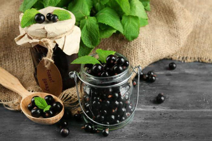 Черная смородина - полный обзор применения ягод, листьев, продуктов переработки