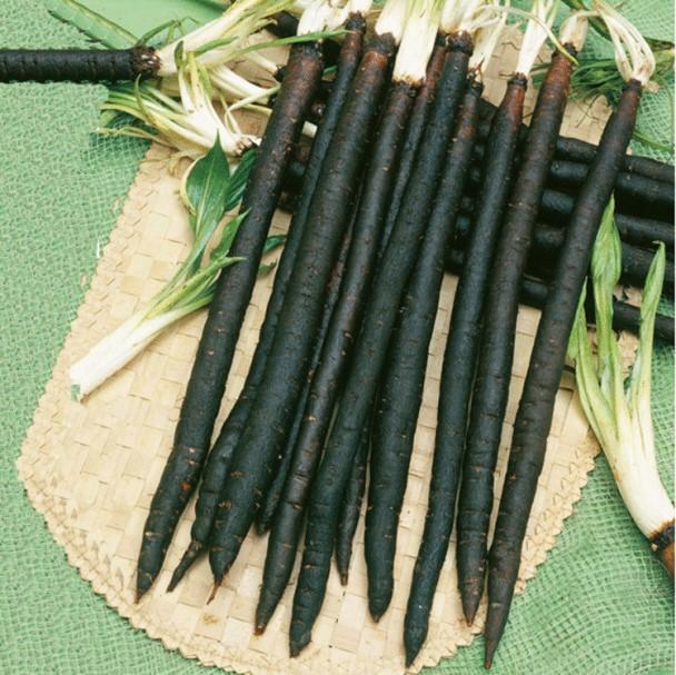 Как получить хороший урожая черной моркови Скорцонеры