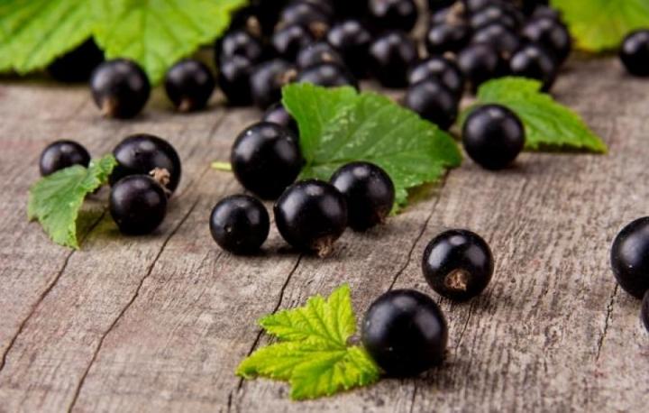 Лекарственные формы - чаи, отвары, настойки из черной смородины