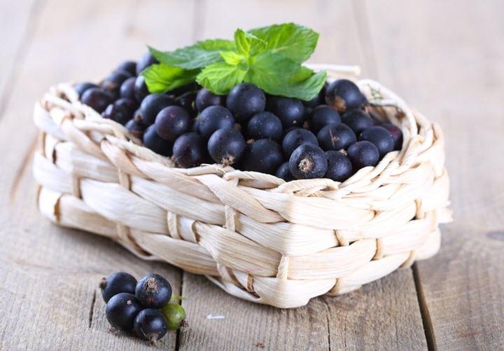 Особенности заготовки и хранения ягод черной смородины