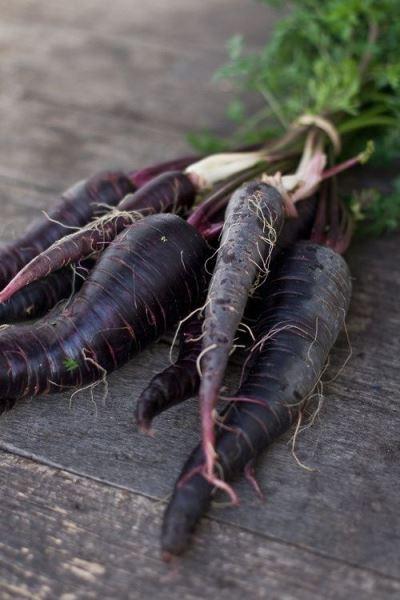 Польза и вред корнеплода черной моркови