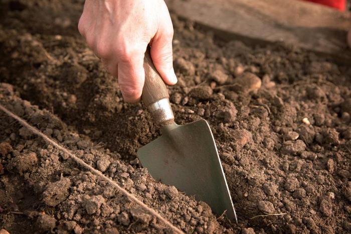 Как подготовить почву к посадке моркови