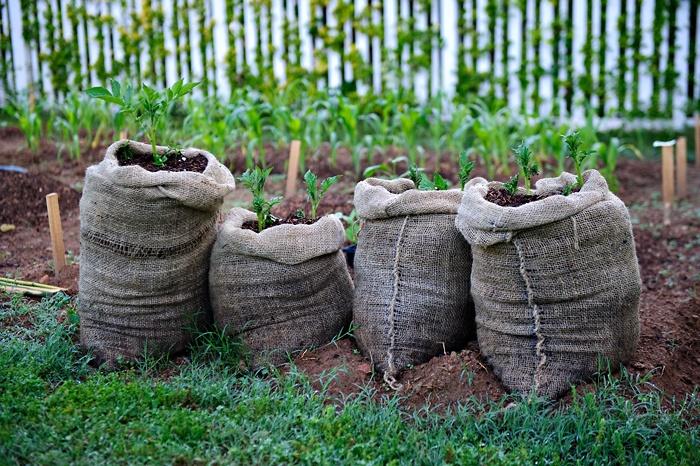 Как расположить мешки для выращивания картофеля