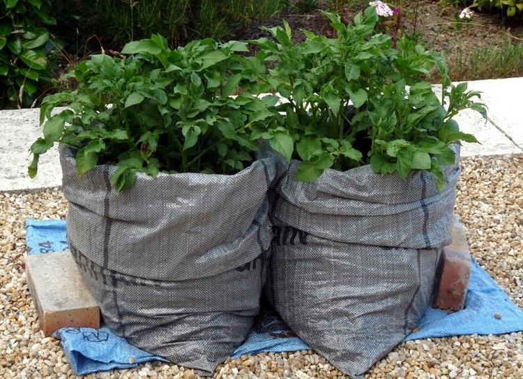 Картошка в мешках - посадка и уход пошагово