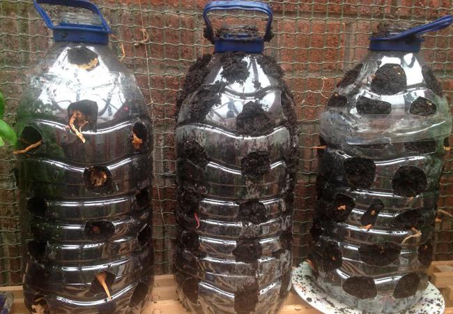 Лук в пластиковой бутылке - подготовка тары
