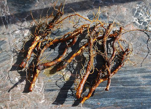 Основные способы размножения малины черенками - черенкование корней