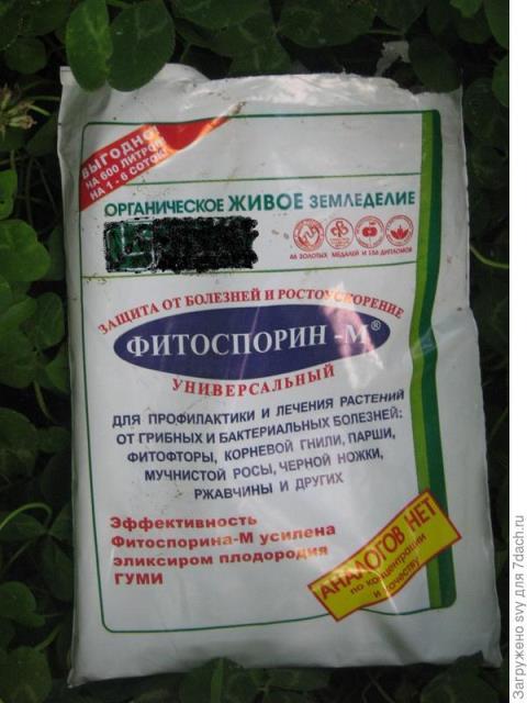 Освобождаем малину от вредителей - обработка кустарника фитоспорином