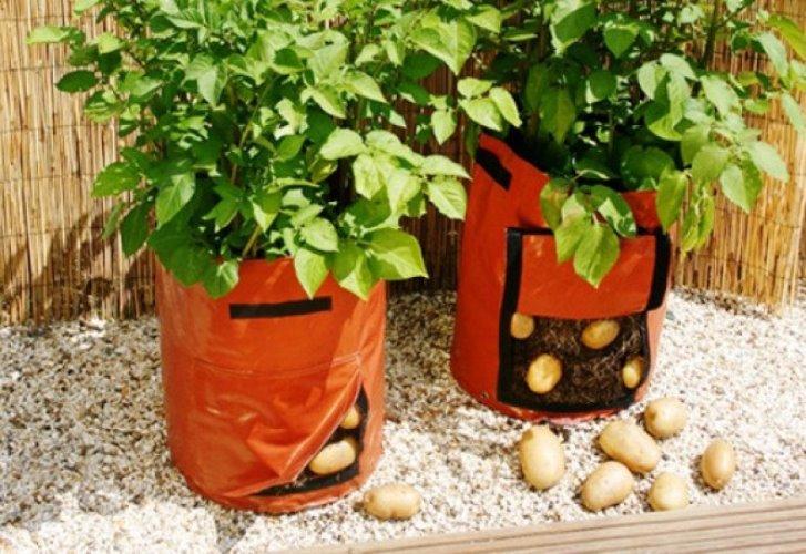 Плюсы выращивания картофеля в мешках - сбор урожая