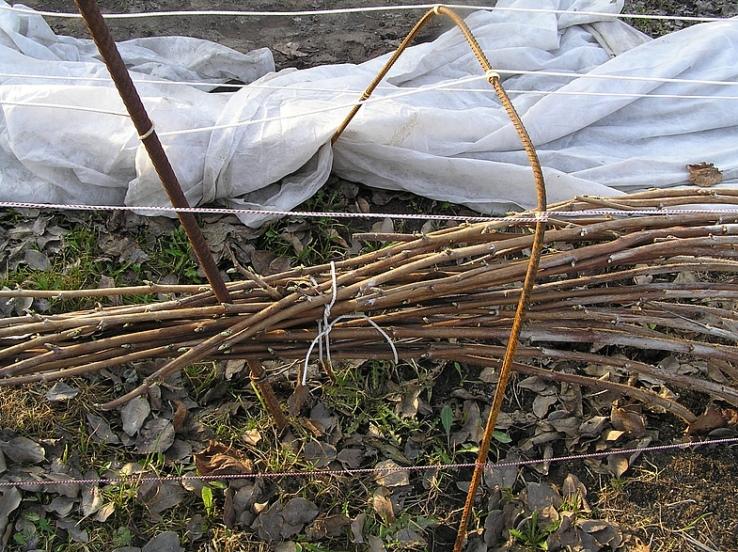 Подготовка кустарников малины для укрытия на зиму
