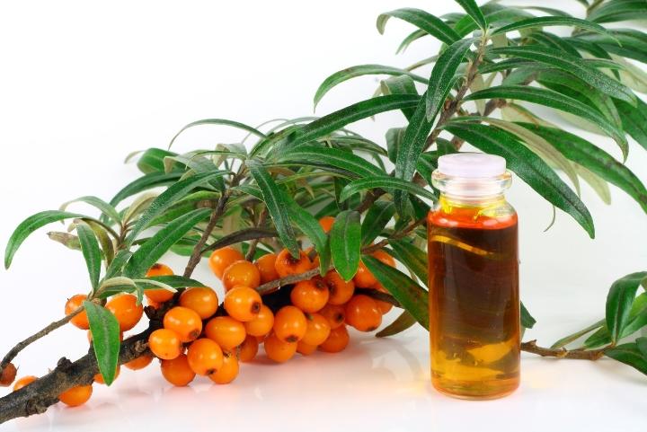 Применение облепихового масла в гинекологии