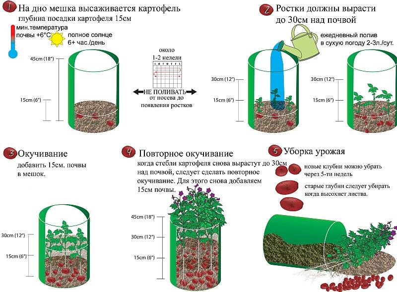 Суть метода выращивания картофеля в мешках - пошаговая инструкция