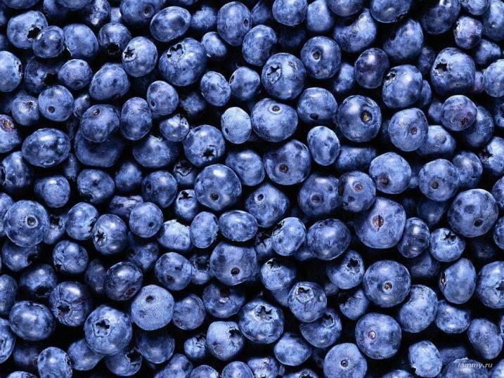В каком виде ягоды черники содержат наибольшее количество полезных веществ