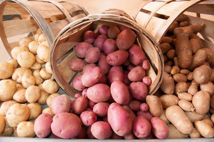 Виды и сорта картофеля - выбираем лучший вариант для посадки