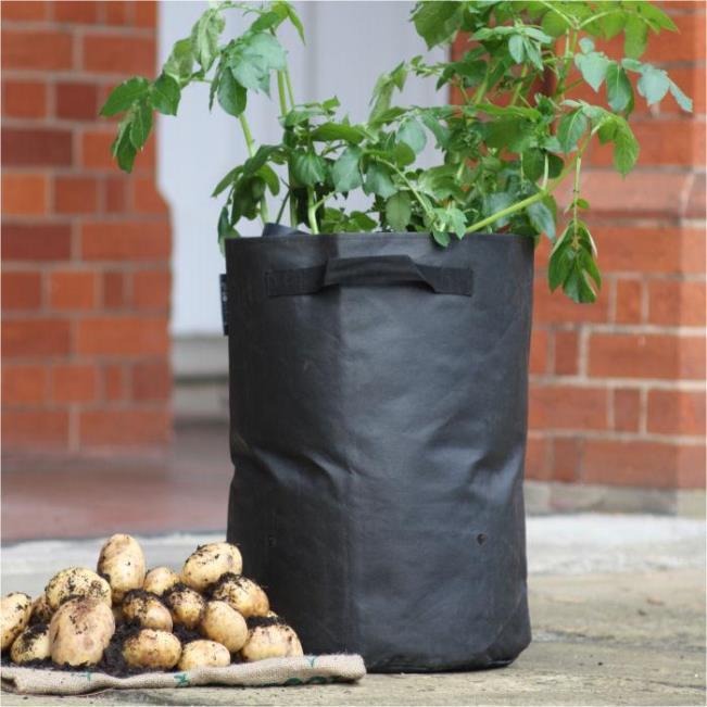 Все ли сорта подойдут для выращивания в мешках