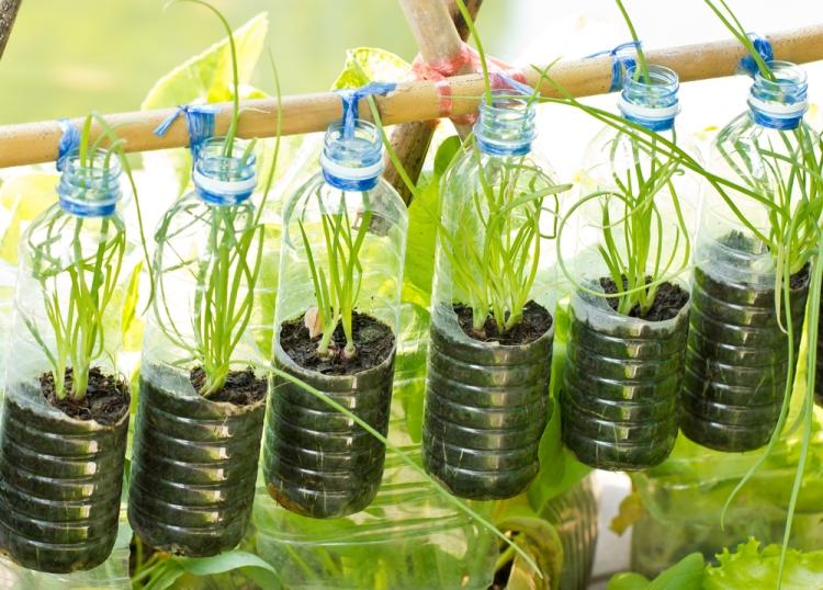 Выращивание лука в пластиковой бутылке - экономим место