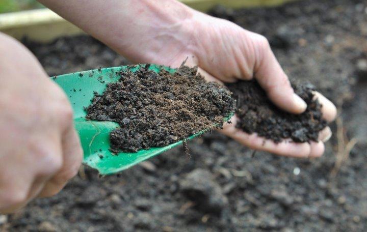 Чем подкормить дерево черешни для увеличения плодоношения