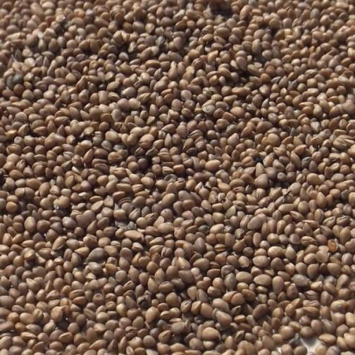 Как размножать шелковицу семенами