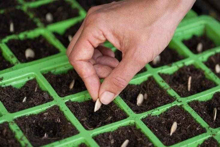 Какой грунт лучше подойдет для проращивания тыквенных семян