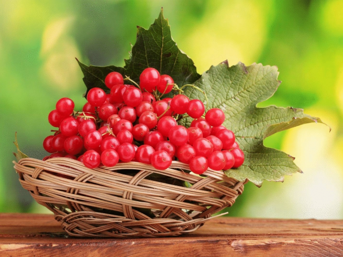 Калина красная - противопоказания к употреблению ягод