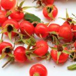 Чем полезен шиповник для организма? Полезные свойства плодов шиповника