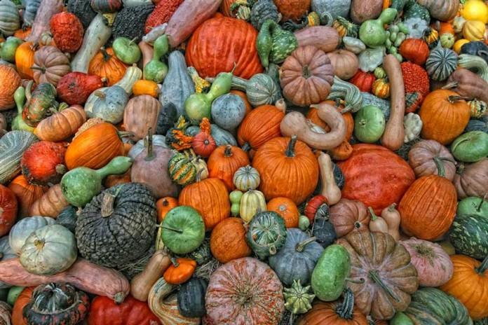 Лучшие сорта тыквы для выращивания в открытом грунте