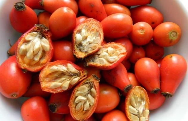 Можно ли вырастить шиповник из семени