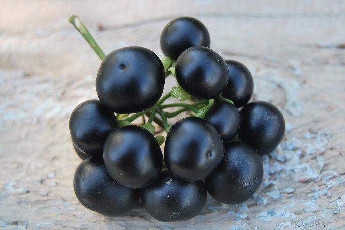 Особенности сбора и заготовки полезной ягоды санберри