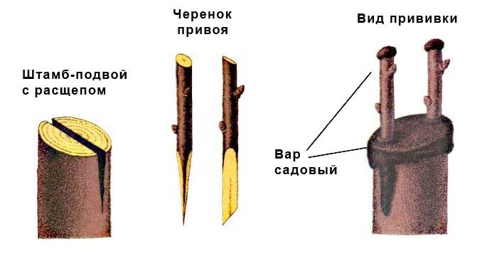 Подготовка к процедуре прививки