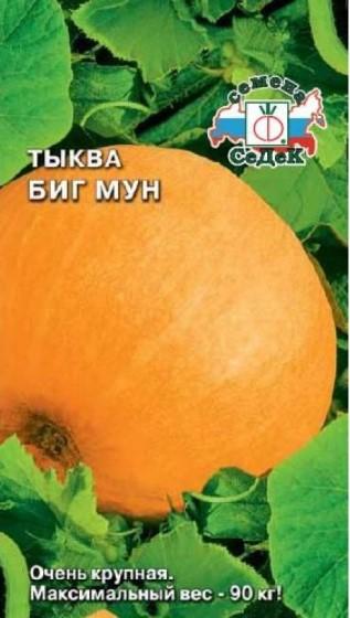 Популярные сорта крупноплодной тыквы - Биг Мун