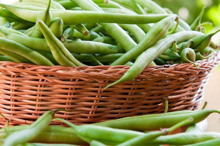 Посадка и выращивание спаржевой фасоли в открытом грунте, уборка урожая