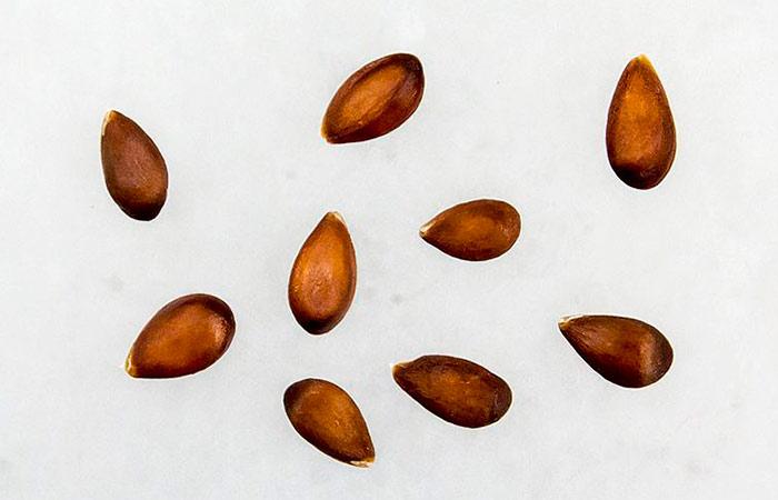 Технология посева - как посадить яблоню из косточки в домашних условиях