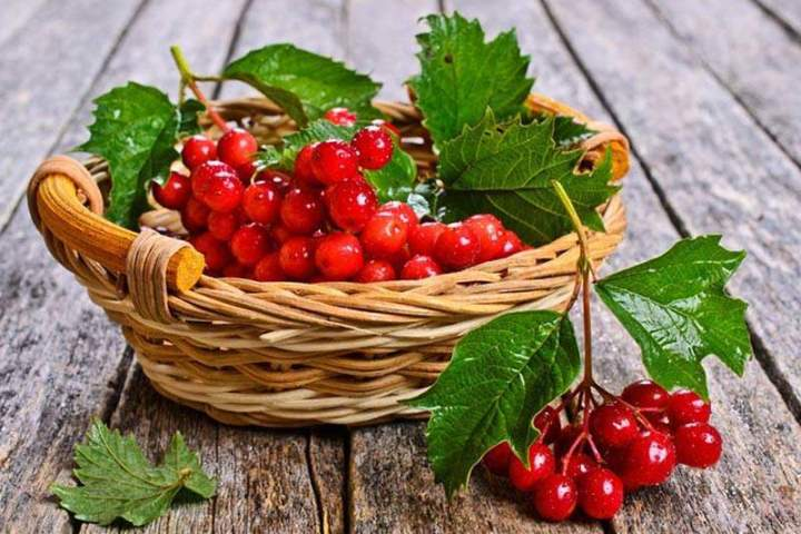 Укрепление нервной системы с помощью ягод калины