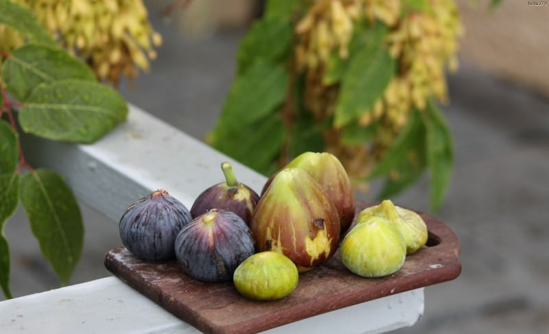 Какие различают сорта и разновидности инжира